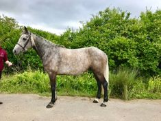 Shadow is a very well put together stunning little horse. Full bred registered. She has impeccable manners in and out of the stable and is an absolute dream to have about and handle. Will stand and be fussed over by the children all day long. Shadow is a quality horse that would be a top potential pony club event pony, she is flashy and has an athletic way of going. Very level and easy to ride on the flat and around a course of fences. Long Shadow, Horses For Sale, Show Jumping, 5 Year Olds, Manners, Stables, Fences, New Mexico, Pony