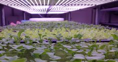 Why Buy LED Grow Lights? | Led Grow Lights | Pinterest | Led Grow Lights, Led  Grow And Grow Lights