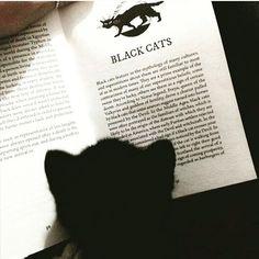 Black #cat - Foto do Instagram de ☆Heather☆ • 21 de abril de 2016 às 20:54 #witch