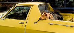 Whilst cars are generally manly, no car is more manly than a ute. Most utes come with a dog pre-installed.