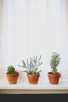 windowsill plants / ABM