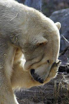 24 Best Lustige Bilder Tiere und Natur images | Funny
