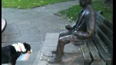 This dog is ready to play fetch, but convincing a statue to play along can be hard work. Smile as you watch this very friendly dog try to convince a statue to play with him.
