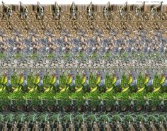 Hidden Picture in 3D | Dinosaur