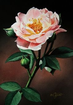 Evening Rose, painting by artist Jacqueline Gnott