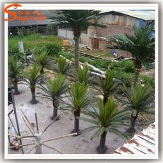 https://www.alibaba.com/product-detail/ST-CY01-Cycas-palm-tree-barbed_60545510371.html