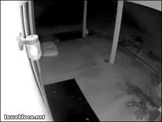 Clever dog entering the house(gif)