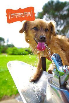 So refreshing! :) www.wetnosefotos.com