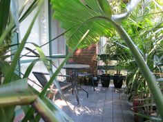The plants on the front balcony / patio at the Mount Eliza home unit / apartment for sale.