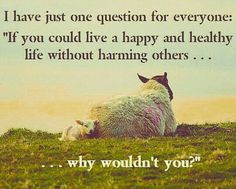 Vegan inspiration #vegan # meme #inpiration