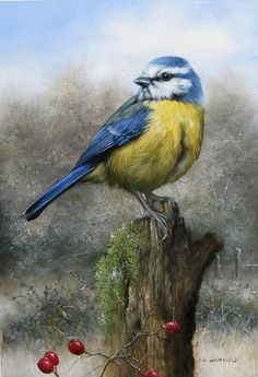 Wildlife Painting by Carl Whitfield Pretty Birds, Beautiful Birds, Watercolor Bird, Watercolor Paintings, Watercolor Portraits, Watercolor Landscape, Abstract Paintings, Graffiti Kunst, Bird Illustration