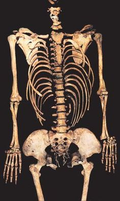 The mother-to-be: She lived somewhere between 1700 and 1850, and was carrying what was almost certainly her first baby when she died, just 22 weeks into her pregnancy. The foetal skeleton is intact - one of the youngest skeletons ever recovered in British archaeology. The woman's hip size reveals she probably hadn't given birth previously. Since her pregnancy was only halfway through, it's more likely she died of an infection than as a result of birth
