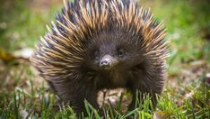 Which Walkabout Australia animal are Buzz around the web Fairy Makeup, Mermaid Makeup, Makeup Art, Funny Animals, Cute Animals, Australia Animals, Australian Birds, Australian Bush, Echidna