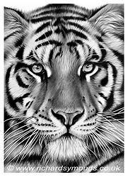 Tiger Pride