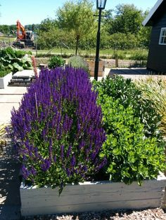 Lavender, plants and planters in the station garden at the Nationaal Smalspoormuseum in Katwijk, The Netherlands.