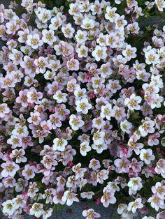 Flower Close Up, Flowers, Plants, Plant, Royal Icing Flowers, Flower, Florals, Floral, Planets