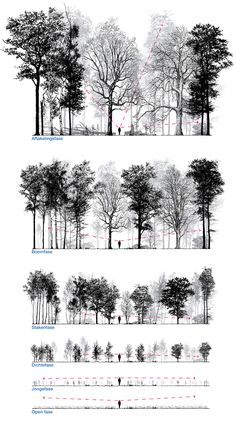 Patrick Ruijzenaars / In imagining and designing forest is frequently talked…