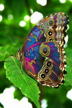 The beauty that is Nature.