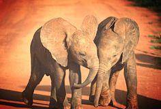 Kenya Photography Kenya Safari Elephant Baby by PhotosbyAnnaMarie