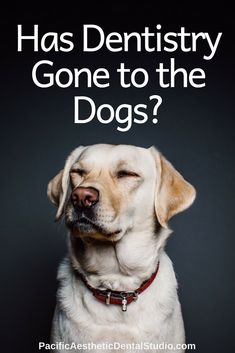 Do you know what one of the most important and underrated aspects of positive dog training is? Having you dogs attention.Which is why this post cover how to get your dog's attention as well as three easy and fun exercises to train this behavior. Dry Dog Shampoo, Positive Dog Training, Dog Cleaning, Dog Hacks, Fun Workouts, Fun Exercises, Dog Training Tips, Happy Dogs, Happy Puppy