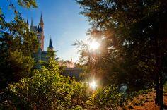 Top 10 Cinderella Castle Photo Spots - Disney Tourist Blog