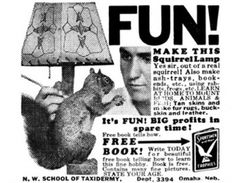 nuthin' like a squirrel lamp to complete your decor ....'specially when you make it YOURSELF from a real backyard squirrel!
