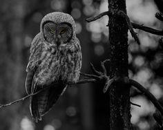ITAP of a spooky owl in the woods http://ift.tt/2f9BEjo