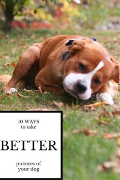 10 Ways to Take Better Pictures of Your Dog