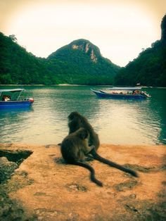 Langkawi, Malaysia  Do not be fooled by their cute appearance. Those monkeys are terrors on that island! They loot homes and villas, chase tourists, and steal food!