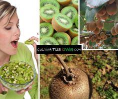 Compra tus #Kiwis Orgánicos en MARZO y el pedido de Abril es GRATIS. Entrega GRATUITA. Compra http://ow.ly/KawqA