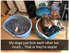 43 Hilarious Memes For When You Need A Break - Funny Gallery #dogsfunnyhilarious