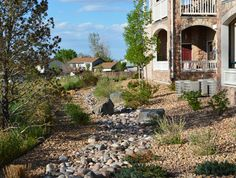 A water saving landscape renovation.  This areas used to be all lawn- with fertilizer, lawn chemicals, and especially lots of water all being dumped on it trying to keep the lawn alive in our arid climate.  Now these plants thrive with minimal water or maintenance!