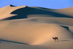 the gobi desert, mongolia :)