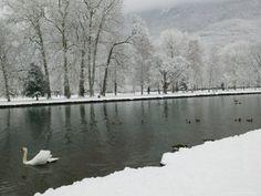Chateau de Vizille Park, Swan Lake, Vizille, Isere, French Alps, France