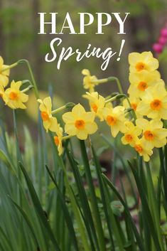 181 Best Spring Blooming Bulbs Images In 2019 Bloom Bulb Bulb Lights