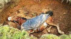 Horse rescued from sinkhole Horse Rescue, Animal Rescue, 10 Year Old, Firefighter, Horses, Pets, Animals, Animales, Animaux