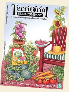 Vegetable seed, flower seed & herb seeds for sale. Buy live plants at Territorial Seed Company. Garden Catalogs, Seed Catalogs, Herb Seeds, Garden Seeds, Burpee Seeds, Vintage Seed Packets, Organic Gardening Tips, Gardening Blogs, Seeds For Sale