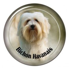 Bichon Havanais 3D sticker - #bichonhavanais
