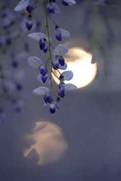 Moon/Flowers/Reflection