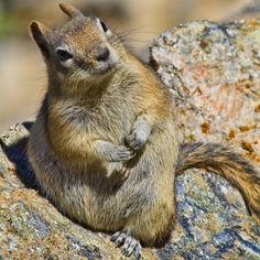 Squirrels are the tits