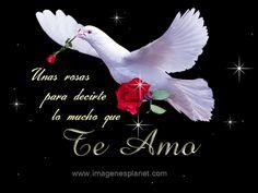 Imágenes+De+Amor+Palomas+y+Frases+para+descargar