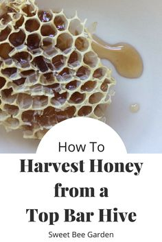 Charmant How To Harvest Honey From A Top Bar Hive