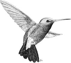 pen and ink for illustrations - Google Search