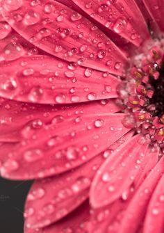 Gerbera flower with water drops by Lorena on Creative Market
