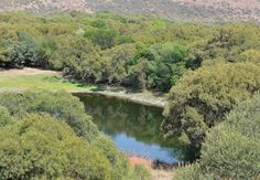Free State National Botanical Garden in Bloemfontein, Free State. On the north western fringes of Bloemfontein lie 70 hectares of botanical garden, in . National Botanical Gardens, Free State, South Africa, River, Places, Landscapes, Outdoor, Paisajes, Outdoors