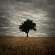 solitary tree on field