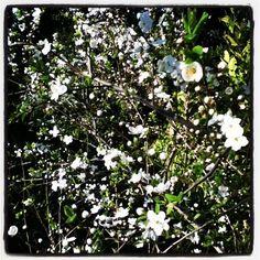 spring in bologna