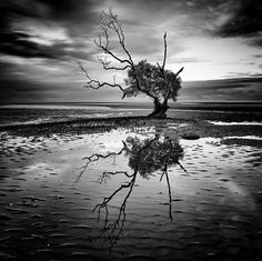 The Roots of Black and White Photography is much deeper than that of Color Photography. Initially there wasn't much to choose for photographers. Vintage Nature Photography, Summer Nature Photography, Tree Photography, Color Photography, Amazing Photography, Landscape Photography, Contrast Photography, Perspective Photography, Artistic Photography