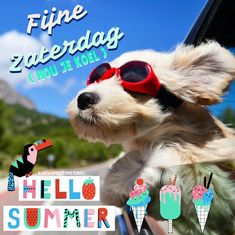 Good Night, Good Morning, Dogs, Summer, Animals, Strand, Nighty Night, Buen Dia, Summer Time