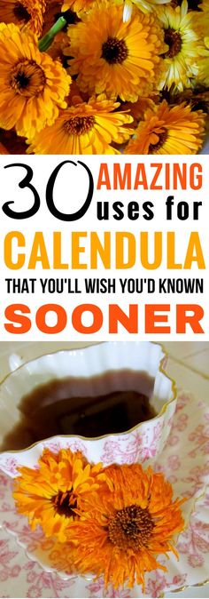 Calendula is a miracle herb that cure tons of common ailments. Click to learn about 30 Amazing Uses for Calendula today!